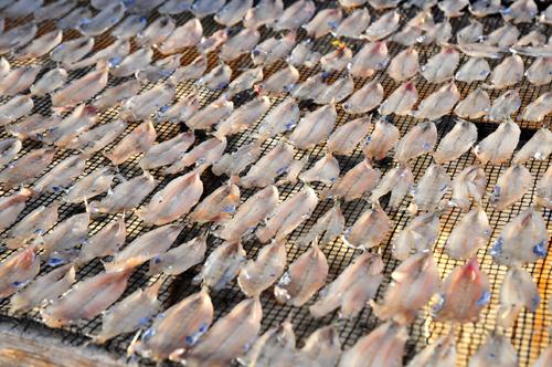 bantayan island4 fish drying.jpg