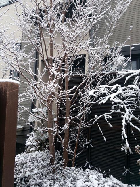 2013-01-28 saitama.jpg