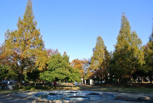 rose park  6.jpg