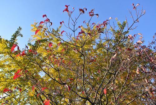 rose park 8.jpg