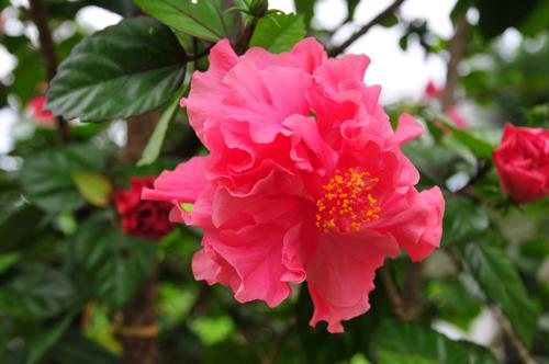 pg pink flower.jpg